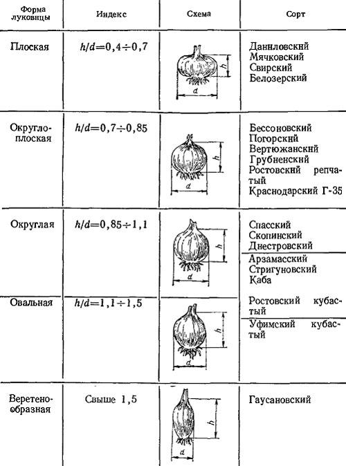 Размеры — диаметр и высота
